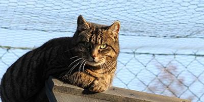 gwendolinei-ekh-bückeburg-beitragsbild-400x200 Weihnachten mache ich einem Tierheimtier ein Geschenk