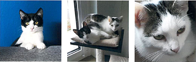 hilde-und-merle Hilde und Merle haben ein Zuhause