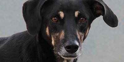 molly-hund-bückeburg-beitragsbild-400x200 Weihnachten mache ich einem Tierheimtier ein Geschenk