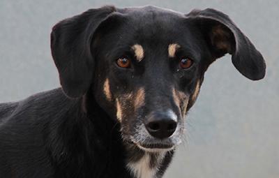 molly-hund-bückeburg-beitragsbild Hund Molly aus Rumänien sucht Paten