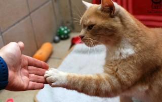 training-klickern-armani-beitragsbild-320x202 Katzenratgeber