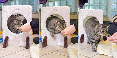 training-klickern-armani-collage Clickertraining mit Katzen