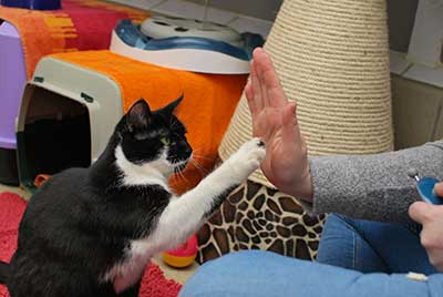 training-klickern-armani-high-five Clickertraining mit Katzen