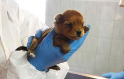 welpe-kommt-ins-haus-beitragsbild Projektpatenschaft - Aktiv im Tierschutz