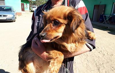 4-hunde-polen-beitragsbild Unterstützen Sie das Tierschutzliga-Dorf