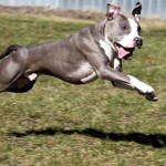 Joker-150x150 Kampfhund!?