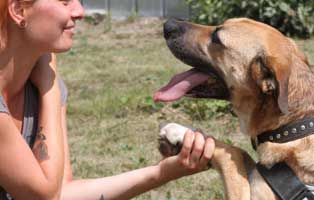 facebook-beitragsbild-neu-klein Zausels Hundetagebuch - Stars und Sternchen…