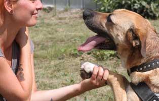 facebook-beitragsbild-neu-klein Floffis Hundetagebuch – 1.  Monat
