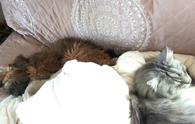 floffis-hundetagebuch-5-monat-beitragsbild Floffis Hundetagebuch – Tag 3