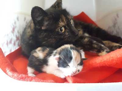 gartenanlage-start-ins-leben-maedel2 3 Katzenmädels suchen Start-ins-Leben Paten