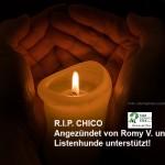 "kerze-chico-romy-150x150 ""Kampfhund"" Chico mußte bezahlen"