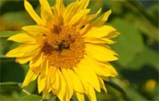 wildbienen-retten-beitragsbild-klein Kleintierratgeber