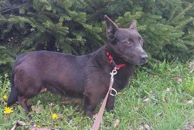 aufnahmepatenschaft-krecik Aufnahmepatenschaft - 10 Hunde aus Polen