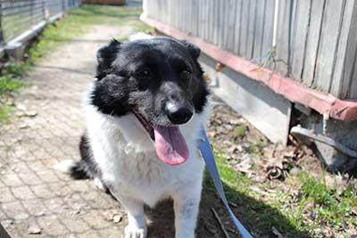 aufnahmepatenschaft-mola Aufnahmepatenschaft - 10 Hunde aus Polen