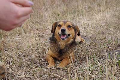 aufnahmepatenschaft-ruede3_PL Aufnahmepatenschaft - 10 Hunde aus Polen