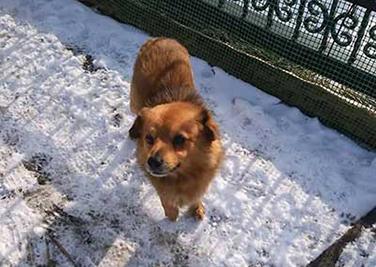 aufnahmepatenschaft-spajki Aufnahmepatenschaft - 10 Hunde aus Polen