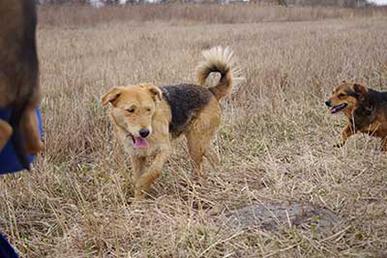 aufnahmepatenschaft-tasha Aufnahmepatenschaft - 10 Hunde aus Polen