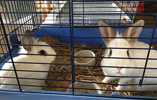 kaninchen-ausgesetzt-beitragsbild Veranstaltungen