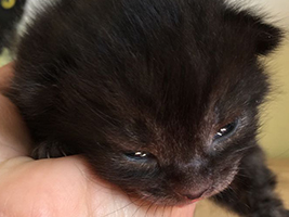 katzenbaby1-bueckeburg Start-ins-Leben-Patenschaft - Übersicht aller Tierbabys