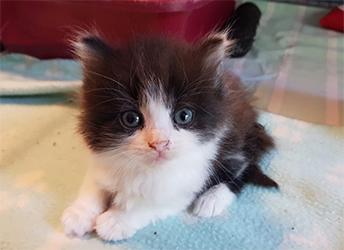 katzenbaby1-maennlich-schuhkarton Zwei Katzenbabys in Schuhkarton entsorgt