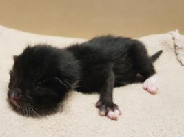 katzenbaby1-weiblich-tierschutzliga-dorf Start-ins-Leben-Patenschaft - Übersicht aller Tierbabys