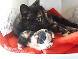 katzenbaby1-weiblich-unterheinsdorf Start-ins-Leben-Patenschaft - Übersicht aller Tierbabys