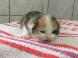 katzenbaby1-weiblich-wollaberg Start-ins-Leben-Patenschaft - Übersicht aller Tierbabys
