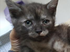 katzenbaby2-weiblich-katzenstation-thueringen Start-ins-Leben-Patenschaft - Übersicht aller Tierbabys