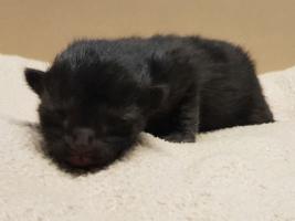 katzenbaby2-weiblich-tierschutzliga-dorf Start-ins-Leben-Patenschaft - Übersicht aller Tierbabys