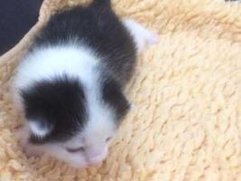 katzenbaby2-weiblich-wollaberg Start-ins-Leben-Patenschaft - Übersicht aller Tierbabys