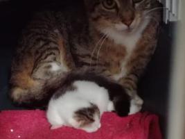 katzenbaby2.1-bueckeburg-1 Start-ins-Leben-Patenschaft - Übersicht aller Tierbabys