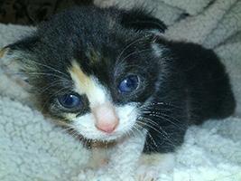 katzenbaby2.1-weiblich-bueckeburg Start-ins-Leben-Patenschaft - Übersicht aller Tierbabys