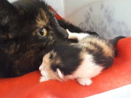 katzenbaby3-weiblich-unterheinsdorf Start-ins-Leben-Patenschaft - Übersicht aller Tierbabys
