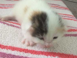 katzenbaby3-weiblich-wollaberg Start-ins-Leben-Patenschaft - Übersicht aller Tierbabys