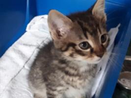 katzenbaby4-maennlich-katzenstation-thueringen Start-ins-Leben-Patenschaft - Übersicht aller Tierbabys