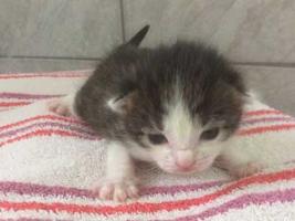 katzenbaby4-weiblich-wollaberg Start-ins-Leben-Patenschaft - Übersicht aller Tierbabys