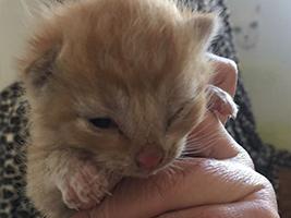 katzenbaby4.1-bueckeburg Start-ins-Leben-Patenschaft - Übersicht aller Tierbabys