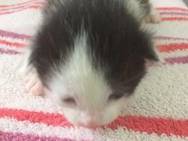 katzenbaby5-weiblich-wollaberg Start-ins-Leben-Patenschaft - Übersicht aller Tierbabys