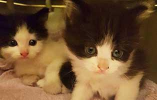 katzenbabys-schuhkarton-beitragsbild Zwei Katzenbabys in Schuhkarton entsorgt