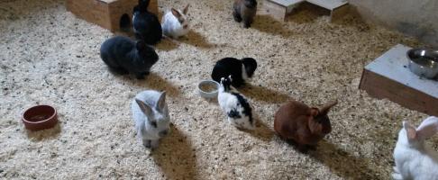 themenwelten-tiere-hitze-kaninchen Vertragen Hunde & Co Hitze?
