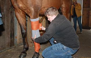 1-hilfe-pferd-beitragsbild-1 Unterstützen Sie den Tierschutzhof Wardenburg