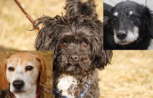 drei-hunde-brauchen-hilfe-beitragsbild Akute Notfellchen
