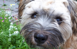 floffi-friseurbesuch-tisch-wiese Floffis Hundetagebuch – 1.  Monat