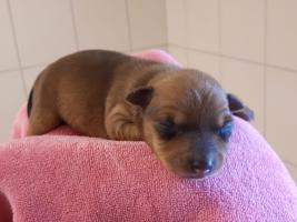 hundebaby1-weiblich-unterheinsdorf Start-ins-Leben-Patenschaft - Übersicht aller Tierbabys
