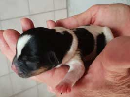 hundebaby2.3-weiblich-wollaberg Start-ins-Leben-Patenschaft - Übersicht aller Tierbabys