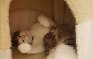 kater-sammy-gluecklich-vermittelt-beitragsbild Schicken Sie uns Ihre Lesergeschichte für Tierfreunde