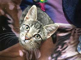 katzenbaby-2.14-weiblich-bueckeburg Start-ins-Leben-Patenschaft - Übersicht aller Tierbabys
