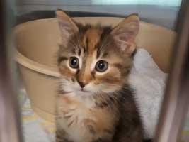 katzenbaby-5.2-weiblich-dorf Start-ins-Leben-Patenschaft - Übersicht aller Tierbabys