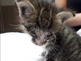 katzenbaby-5.4-maennlich-dorf-1 Start-ins-Leben-Patenschaft - Übersicht aller Tierbabys