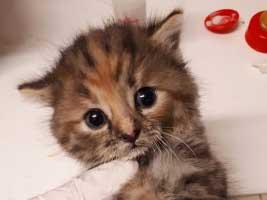 katzenbaby6.1-weiblich-tierschutzliga-dorf Start-ins-Leben-Patenschaft - Übersicht aller Tierbabys